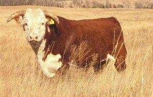 Herd Lg.0041.IMGP9491